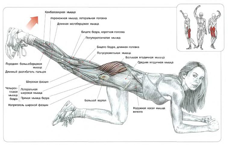 многих таких как накачать мышцу за 2 недели видео таблица